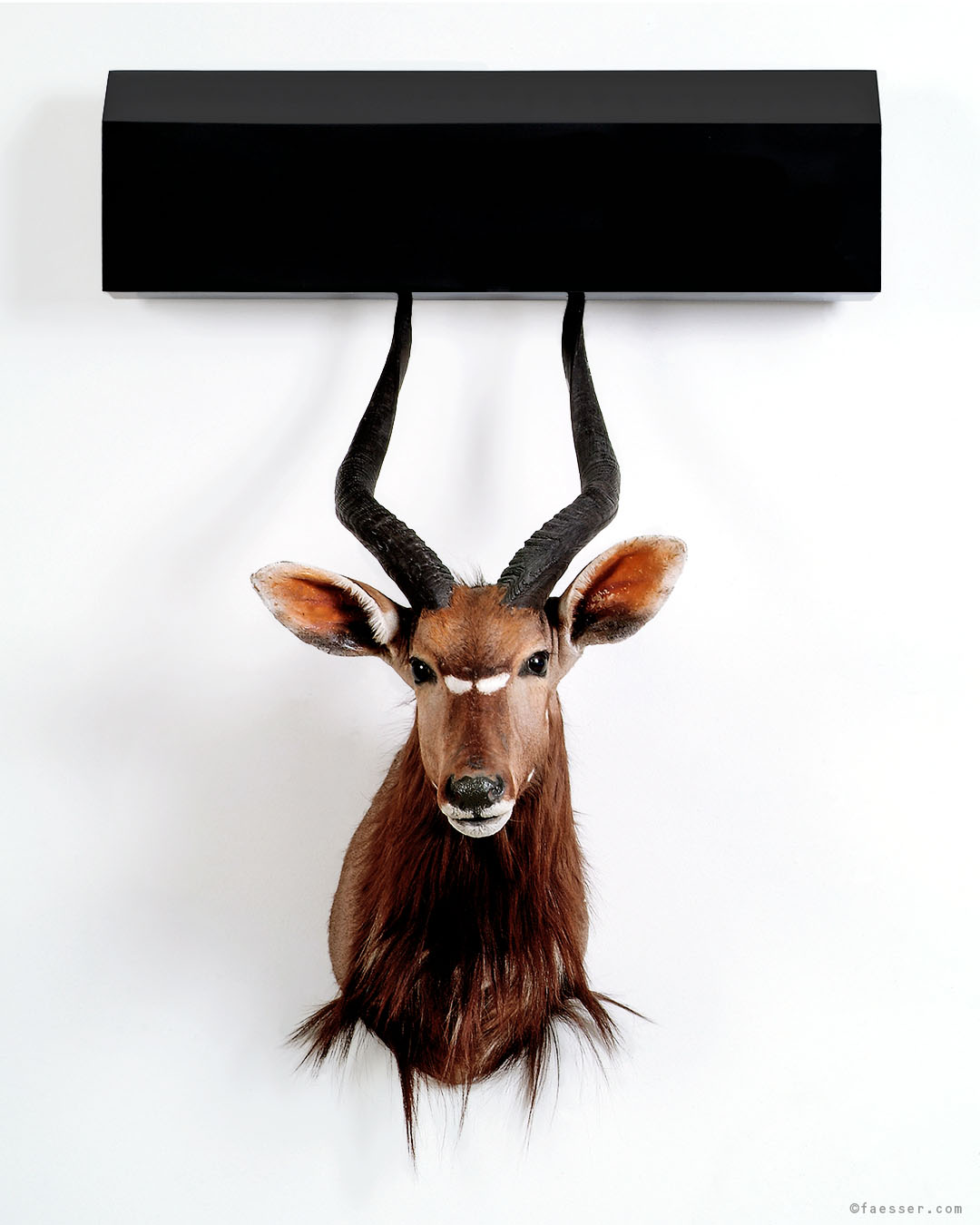 Stuffed Antelope trophy with a skewered black house on the antlers, Roland Faesser 2005